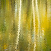 GV 018<br /> <br /> Reflections in a woodland pond create abstract patters.  Greene Valley Forest Preserve, DuPage County, Illinois.