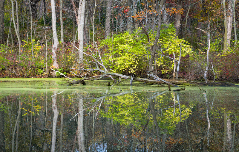 GV 017<br /> <br /> A secluded woodland pond in autumn at Greene Valley Forest Preserve, DuPage County, Illinois.