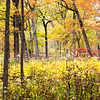 GV 023<br /> <br /> Brilliant autumn colors at Greene Valley Forest Preserve, DuPage County, Illinois.