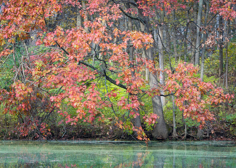 GV 015<br /> <br /> A secluded woodland pond in autumn at Greene Valley Forest Preserve, DuPage County, Illinois.
