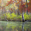 GV 016<br /> <br /> A secluded woodland pond in autumn at Greene Valley Forest Preserve, DuPage County, Illinois.