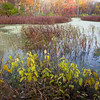 GV 011<br /> <br /> A secluded woodland pond in autumn at Greene Valley Forest Preserve, DuPage County, Illinois.