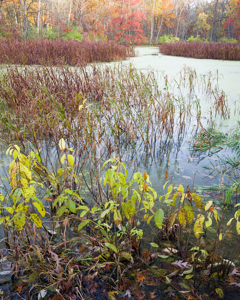 GV 013<br /> <br /> A secluded woodland pond in autumn at Greene Valley Forest Preserve, DuPage County, Illinois.