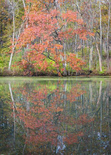 GV 014<br /> <br /> A secluded woodland pond in autumn at Greene Valley Forest Preserve, DuPage County, Illinois.