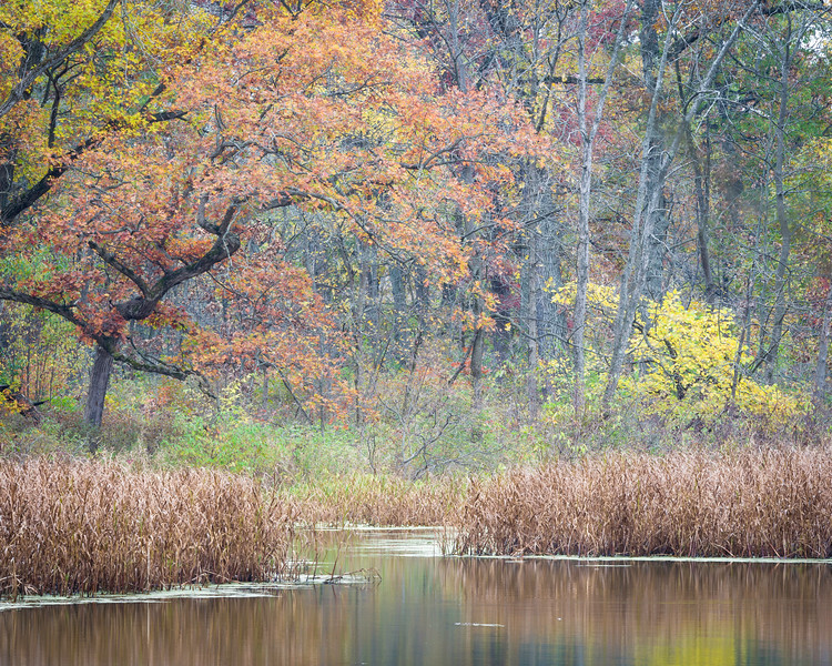GV 009<br /> <br /> A secluded woodland pond in autumn at Greene Valley Forest Preserve, DuPage County, Illinois.