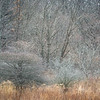 HL 019<br /> <br /> Winter textures and tones along a woodland edge.  Herrick Lake Forest Preserve, DuPage County, Illinois.