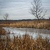 HL 018<br /> <br /> Ice covers the surface of Herrick Marsh on a December day.  Herrick Lake Forest Preserve, DuPage County, Illinois.