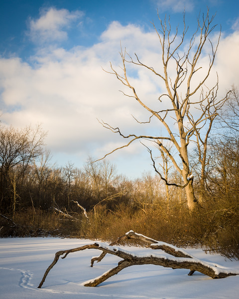 HL 022<br /> <br /> Winter light on the edge of a small marsh at Herrick Lake Forest Preserve, DuPage County, Illinois.