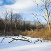 HL 023<br /> <br /> Winter light on the edge of a small marsh at Herrick Lake Forest Preserve, DuPage County, Illinois.