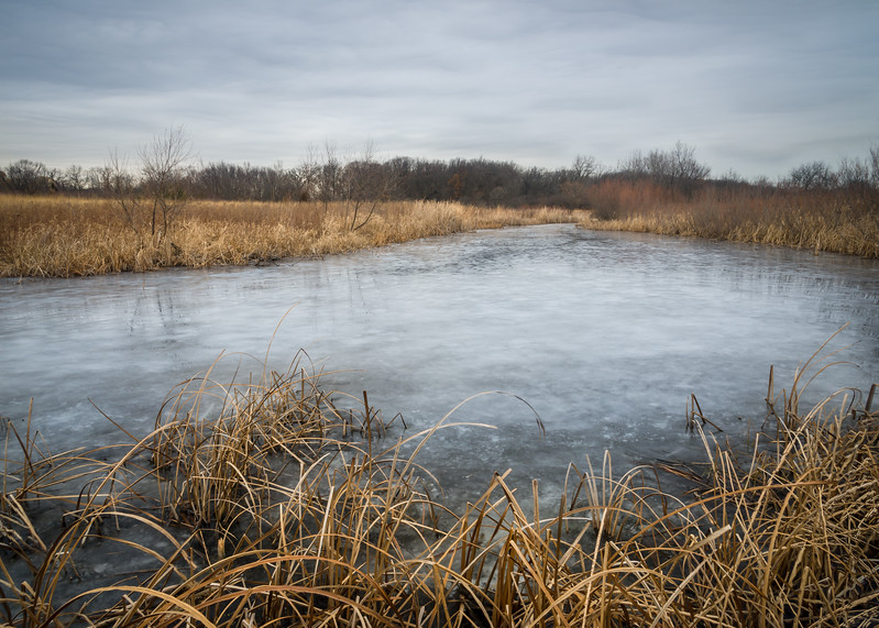 HL 017<br /> <br /> Ice covers the surface of Herrick Marsh on a December day.  Herrick Lake Forest Preserve, DuPage County, Illinois.