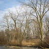 HL 010<br /> <br /> Soft winter light on the shoreline of a small lake at Herrick Lake Forest Preserve, DuPage County, Illinois.