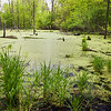 MplGrv 014<br /> <br /> Ephemeral spring pool at Maple Grove Forest Preserve, DuPage County, Illinois.