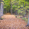 MplGrv 002<br /> <br /> A trail invites hikers to explore the autumn woods at Maple Grove Forest Preserve, DuPage County, Illinois.