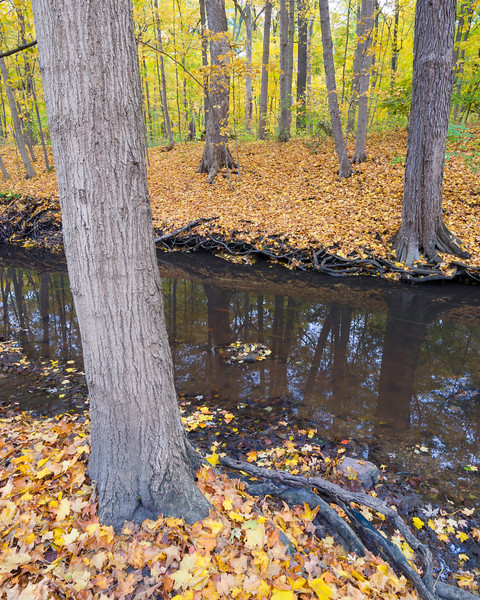 MplGrv 003<br /> <br /> Autumn on St. Joseph's Creek.  Maple Grove Forest Preserve, DuPage County, Illinois.