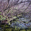 MplGrv 015<br /> <br /> Ephemeral spring pool at Maple Grove Forest Preserve, DuPage County, Illinois.