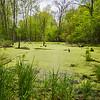 MplGrv 013<br /> <br /> Ephemeral spring pool at Maple Grove Forest Preserve, DuPage County, Illinois.
