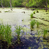 MplGrv 012<br /> <br /> Ephemeral spring pool at Maple Grove Forest Preserve, DuPage County, Illinois.