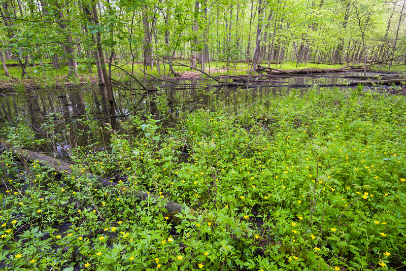 MplGrv 007<br /> <br /> One of many vernal spring pools at Maple Grove Forest Preserve, DuPage County, Illinois.