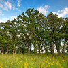 ML 002<br /> <br /> Oak savanna in late summer.  Mayslake Forest Preserve, DuPage County, Illinois.