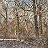 OFO 004<br /> <br /> Winter sunlight filters through the snow-covered branches of a mature oak woodland at Oldfield Oaks Forest Preserve, DuPage County, Illinois.