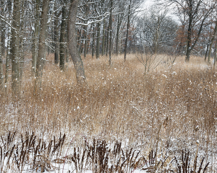 OFO 007<br /> <br /> Fresh snow and muted winter tones at the edge of an oak woods.  Oldfield Oaks Forest Preserve, DuPage County, Illinois.