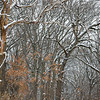 OFO 005<br /> <br /> Fresh snow highlights every trunk and branch in a mature oak woods.  Oldfield Oaks Forest Preserve, DuPage County, Illinois.