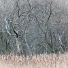 OFO 006<br /> <br /> Cattails and winter branches form natural abstract patters at Oldfield Oaks Forest Preserve, DuPage County, Illinois.