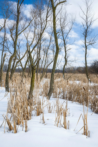 PWW 002<br /> <br /> Winter on one of the many marsh habitats at Pratt's Wayne Woods Forest Preserve, DuPage County, Illinois.