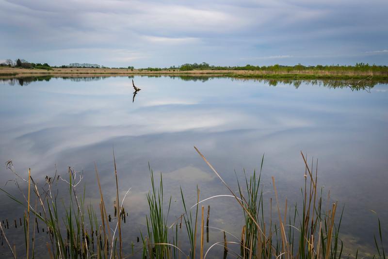 PWW 005<br /> <br /> Sunset at Harrier Lake.  Pratt's Wayne Woods Forest Preserve, DuPage County, Illinois.