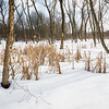 PWW 001<br /> <br /> Winter on one of the many marsh habitats at Pratt's Wayne Woods Forest Preserve, DuPage County, Illinois.