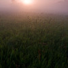SBP 009<br /> <br /> A pale sun shines through a heavy morning fog at Springbrook Prairie Nature Preserve, DuPage County, Illinois.