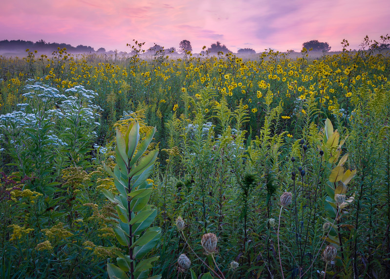SBP 192<br /> <br /> An early autumn sunrise over the prairie at Springbrook Prairie Nature Preserve, DuPage County, Illinois.