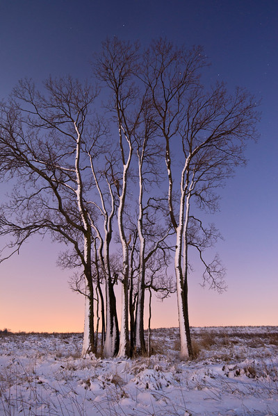 SBP 102<br /> <br /> A winter day ends in a peaceful twilight at Springbrook Prairie Nature Preserve, DuPage County, Illinois.