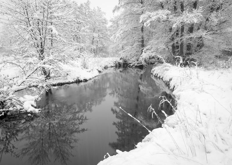 SBP 126<br /> <br /> Fresh snowfall transforms the landscape at Springbrook Prairie Nature Preserve, DuPage County, Illinois.
