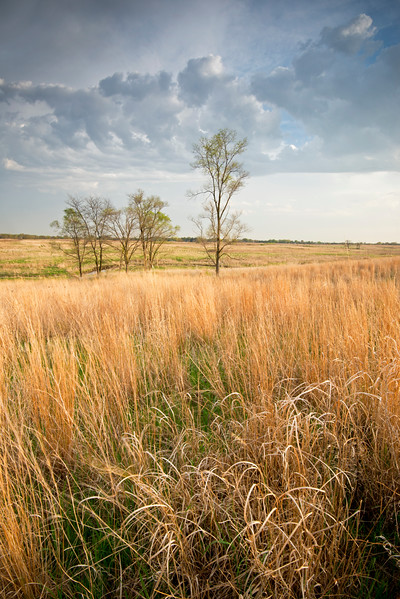 SBP 103<br /> <br /> Prairie grasses glow in sunset light at Springbrook Prairie Nature Preserve, DuPage County, Illinois.