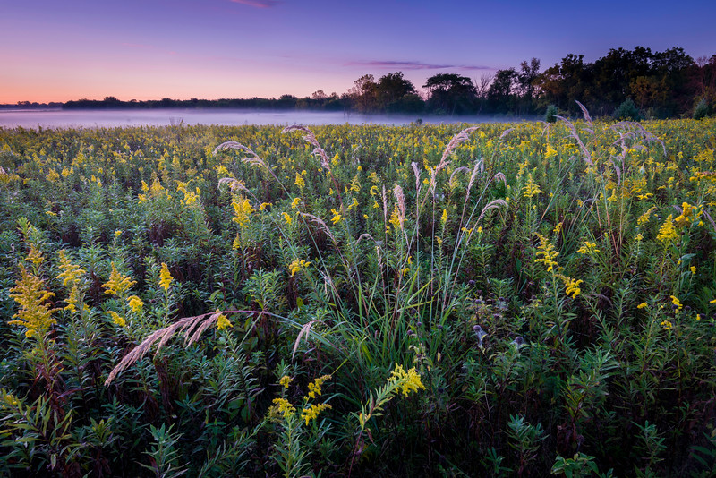 SBP 195<br /> <br /> Dawn over the early autumn prairie at Springbrook Prairie Nature Preserve, DuPage County, Illinois.