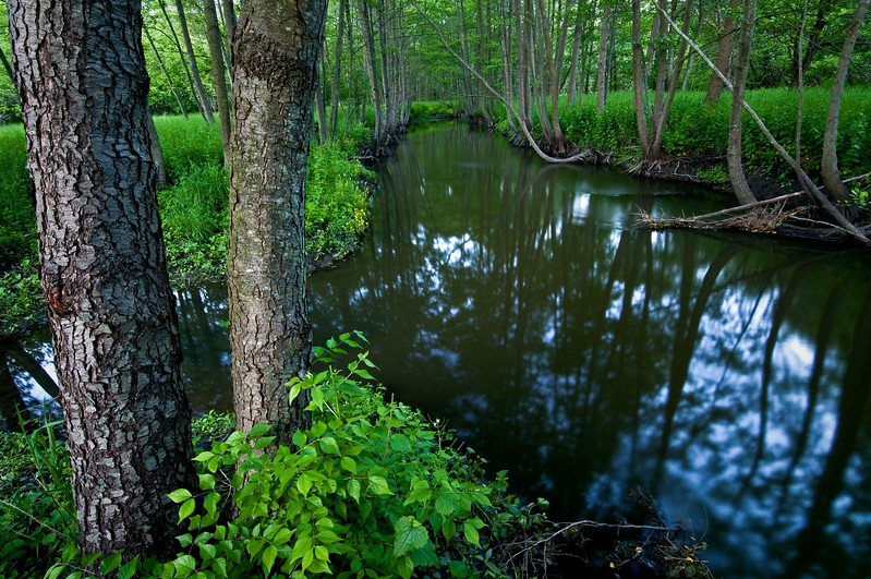 SBP 110<br /> <br /> Summer green along Spring Brook Creek.  Springbrook Prairie Nature Preserve, DuPage County, Illinois.