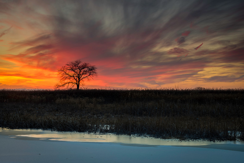 SBP 149<br /> <br /> A winter sunset over a frozen wetland marsh at Springbrook Prairie Nature Preserve, DuPage County, Illinois.