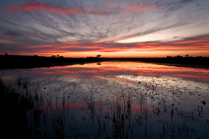 SBP 050<br /> <br /> Tranquil sunset reflections in the calm surface of Crooked Slough.  Springbrook Prairie Nature Preserve, DuPage County, Illinois.