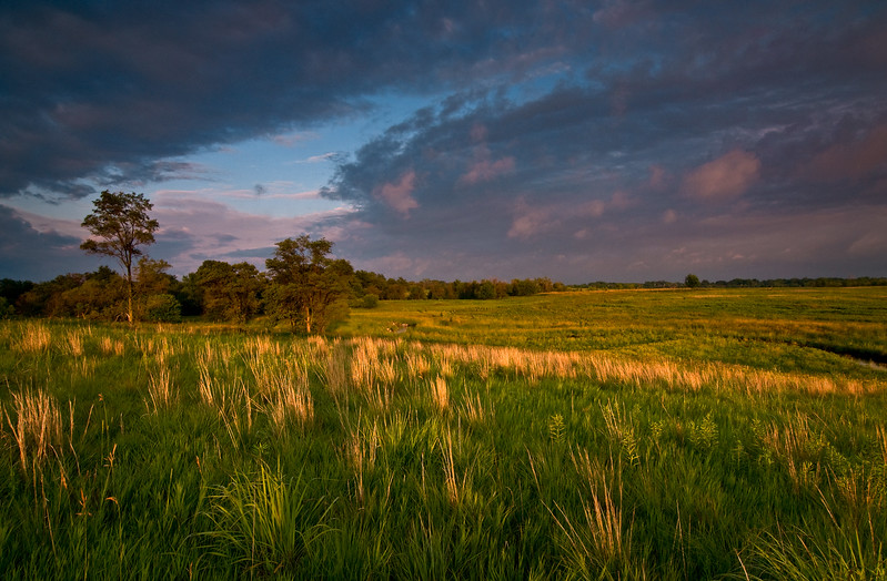sBP 035<br /> <br /> Sunset light on prairie grasses.  Springbrook Prairie Nature Preserve, DuPage County, Illinois.