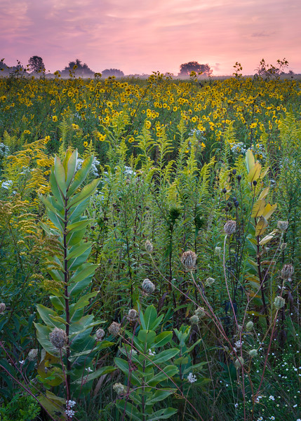SBP 193<br /> <br /> An early autumn sunrise over the prairie at Springbrook Prairie Nature Preserve, DuPage County, Illinois.