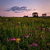 SBP 051<br /> <br /> Summer wildflowers at sunset.  Springbrook Prairie Nature Preserve, DuPage County, Illinois.