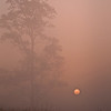 SBP 020<br /> <br /> A pale sun shines through a heavy morning fog at Springbrook Prairie Nature Preserve, DuPage County, Illinois.
