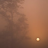 SBP 021<br /> <br /> A pale sun shines through a heavy morning fog at Springbrook Prairie Nature Preserve, DuPage County, Illinois.