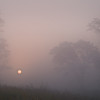 SBP 022<br /> <br /> A pale sun shines through a heavy morning fog at Springbrook Prairie Nature Preserve, DuPage County, Illinois.