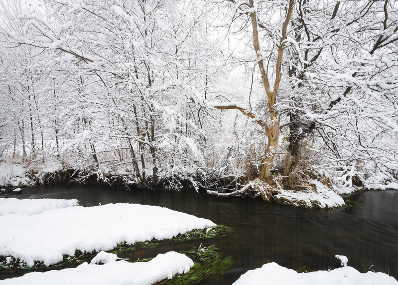 SBP 125<br /> <br /> Fresh snowfall transforms the landscape at Springbrook Prairie Nature Preserve, DuPage County, Illinois.