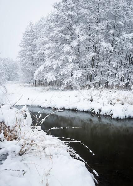 SBP 130<br /> <br /> Fresh snowfall transforms the landscape at Springbrook Prairie Nature Preserve, DuPage County, Illinois.