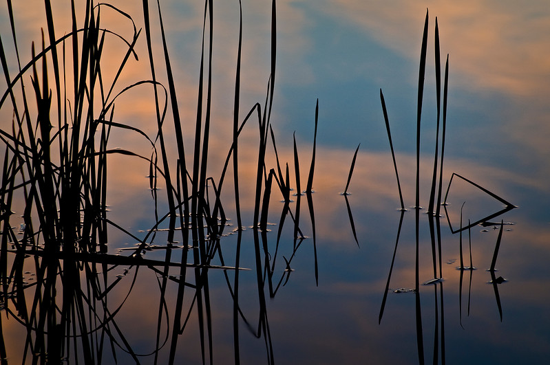 SBP 038<br /> <br /> Sunset clouds are reflected among the shoreline reeds of Crooked Slough.  Springbrook Prairie Nature Preserve, DuPage County, Illinois.