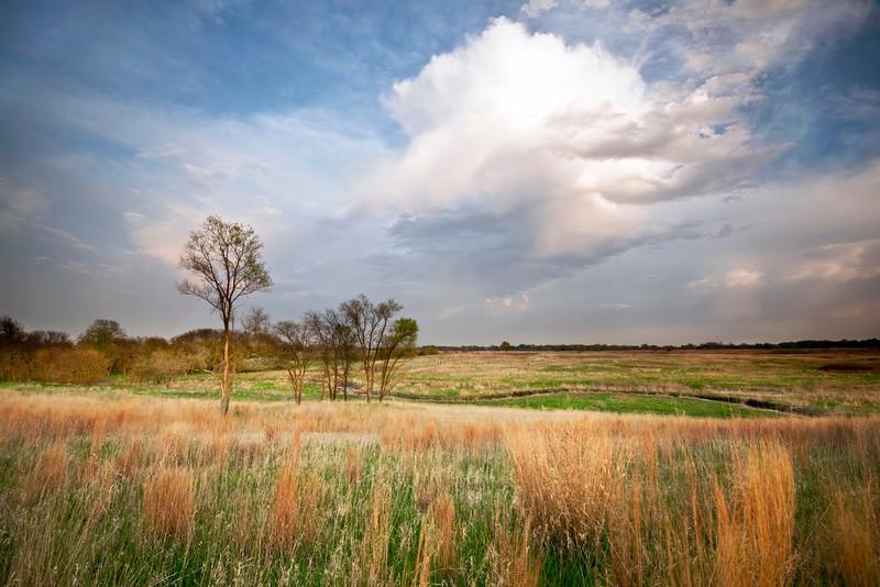 SBP 104<br /> <br /> Prairie grasses glow in sunset light.  Springbrook Prairie Nature Preserve, DuPage County, Illinois.