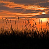 SBP 046<br /> <br /> Prairie grass silhouetted against the setting sun.  Springbrook Prairie Nature Preserve, DuPage County, Illinois.
